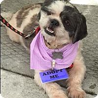 Adopt A Pet :: ROMEO - Fort Lauderdale, FL