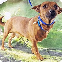 Adopt A Pet :: Rusty-VIDEO! - Griffin, GA