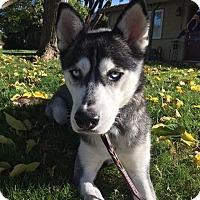 Adopt A Pet :: Elvy - Sacramento, CA