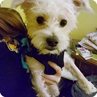 Adopt A Pet :: Mocha - Woodbridge, VA