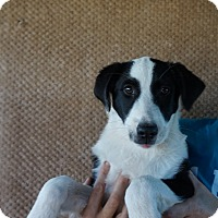 Adopt A Pet :: Java - Oviedo, FL