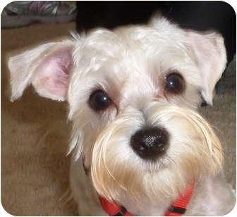 Small White Dog Rescue Omaha Ne