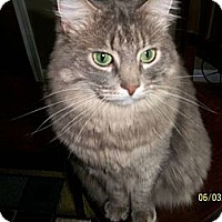 Adopt A Pet :: Daisy - Victor, NY