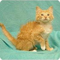 Adopt A Pet :: Risky - Sacramento, CA
