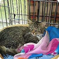 Adopt A Pet :: Amanda - Riverside, RI