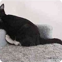Adopt A Pet :: Mallory - Portland, OR