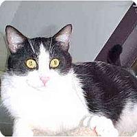 Adopt A Pet :: Bandit - Quincy, MA