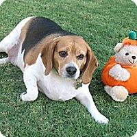 Adopt A Pet :: Spook - Phoenix, AZ
