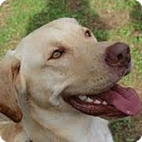 Adopt A Pet :: Forrest (Courtesy Listing) - Richmond, VA