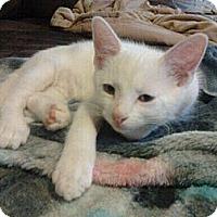 Adopt A Pet :: Kimba - Byron Center, MI