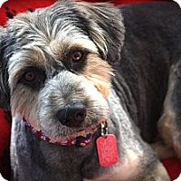 Adopt A Pet :: DUDE - san diego, CA