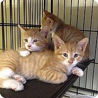 Adopt A Pet :: Mango & Tango - Island Park, NY