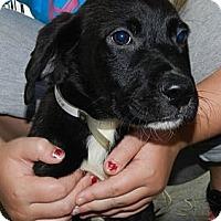 Adopt A Pet :: Monty - Clinton, ME
