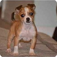 Adopt A Pet :: Josie - Staunton, VA