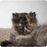 Adopt A Pet :: Shelby - Davis, CA