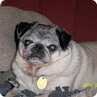 Adopt A Pet :: Mabel - Hinckley, MN