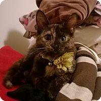 Adopt A Pet :: Duma - Monroe, NC