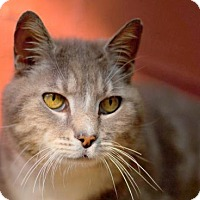 Adopt A Pet :: Stonewall - Harrisonburg, VA