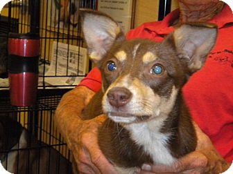 Terrier (Unknown Type, Medium) Mix Dog for adoption in Fresno, California - Robyn