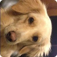 Adopt A Pet :: Leo - Baltimore, MD