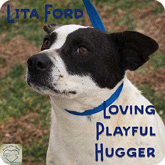 Border Collie/Beagle Mix Dog for adoption in Washburn, Missouri - Lita Ford
