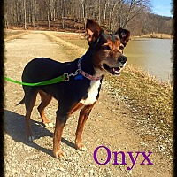 Adopt A Pet :: Onyx - Sharon Center, OH