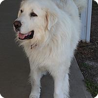 Adopt A Pet :: Kodiak - Bloomington, IL