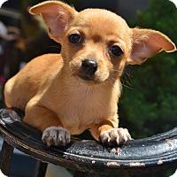 Adopt A Pet :: Sasha - Bridgeton, MO