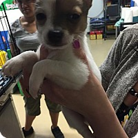 Adopt A Pet :: Chester - Claremont - Chino Hills, CA