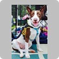 Adopt A Pet :: Zoe - Pittsboro, NC