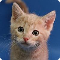 Adopt A Pet :: Max - Overland Park, KS