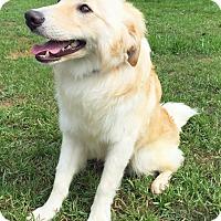 Adopt A Pet :: Lake - BIRMINGHAM, AL