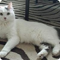 Adopt A Pet :: Olivia - St. Paul, MN