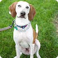 Adopt A Pet :: Blue - Aurora, IL