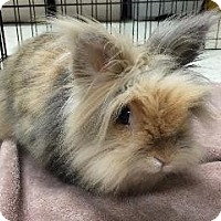 Adopt A Pet :: Sasha - Woburn, MA