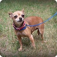 Adopt A Pet :: Fancy (Chiquita) - Muskegon, MI