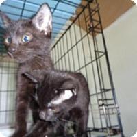 Adopt A Pet :: Jordan - Breinigsville, PA