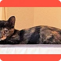 Adopt A Pet :: Topaz - Courtesy Post - Euless, TX