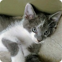 Adopt A Pet :: Manipur - Bruce Township, MI
