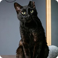 Adopt A Pet :: Webster - Herndon, VA