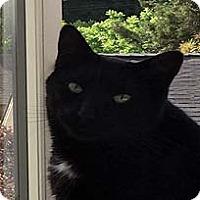 Adopt A Pet :: Hans - Tiburon, CA