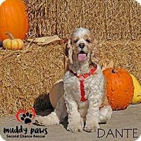 Adopt A Pet :: Dante - Council Bluffs, IA
