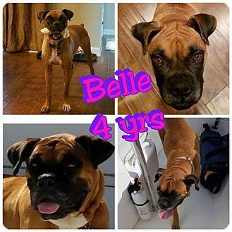Boxer Dog for adoption in Jacksonville, Alabama - Belle