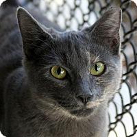 Adopt A Pet :: Sauncey - Sarasota, FL