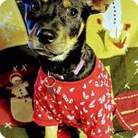 Shepherd (Unknown Type) Mix Puppy for adoption in Detroit, Michigan - Acorn