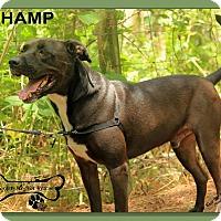 Adopt A Pet :: Champ - Sarasota, FL