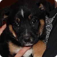 Adopt A Pet :: Romano - Phoenix, AZ