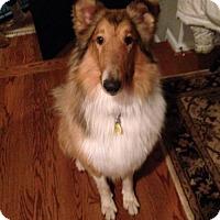 Adopt A Pet :: Luke - Chantilly, VA