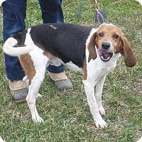 Adopt A Pet :: Alvin, D26 - Mineral, VA