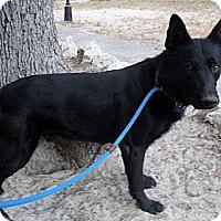 Adopt A Pet :: WILLY - SAN ANTONIO, TX